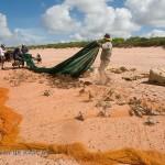 Bennelongia - surveys, identifications and environmental assessments of waterbirds (waterbird surveys)