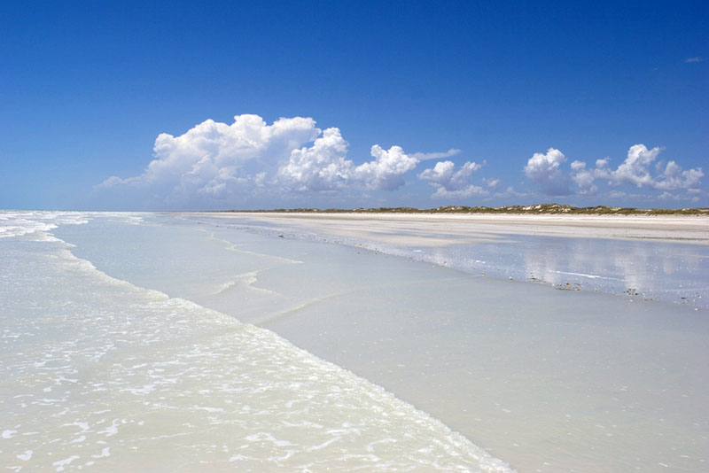 Eighty mile beach recedes bennelongia bennelongia