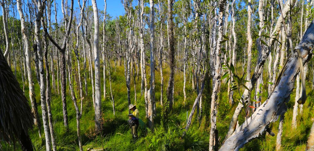 Bennelongia Environmental Consultants surveys, identifications and environmental assessments of flora, vegetation, Renee Young